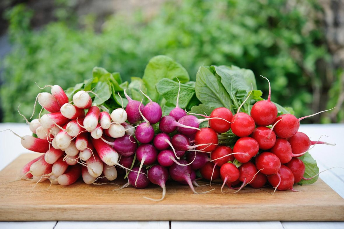 Red, purple and french breakfast radishes on a chopping board outside