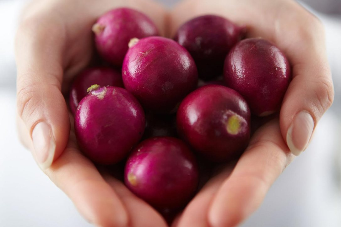 Two hands cupped in the shape of a heart holding purple radishes
