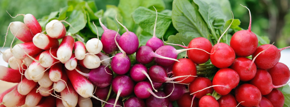 Bunched radishes